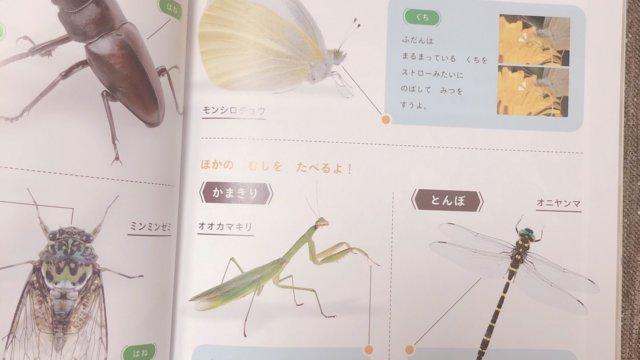 こどもちゃれんじほっぷ絵本2