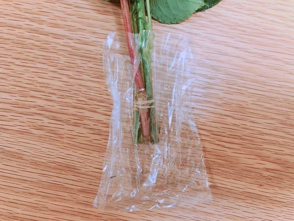 BloomeeLIFE茎